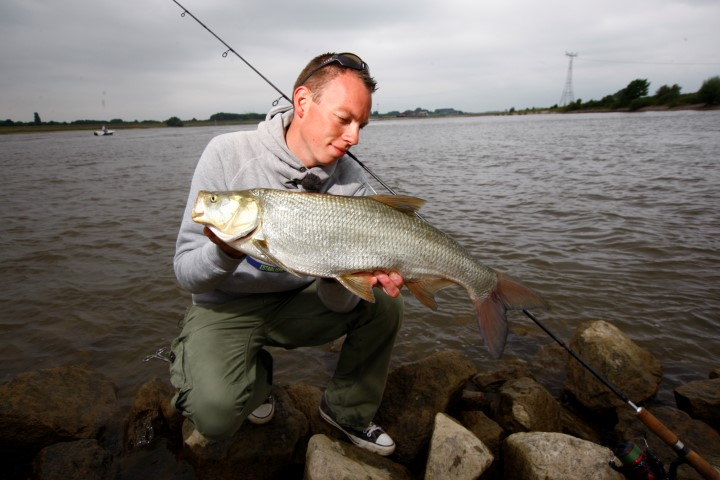 Asp caught in the river Waal