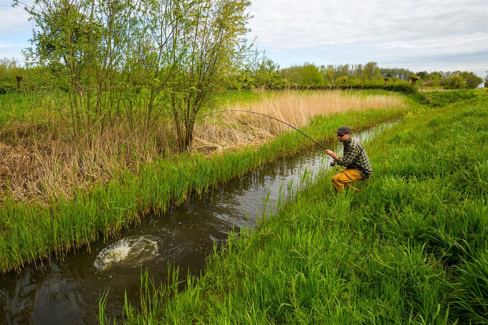 karper polder