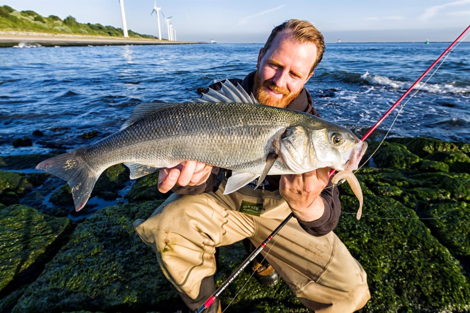 Zeebaars Maasvlakte man vis