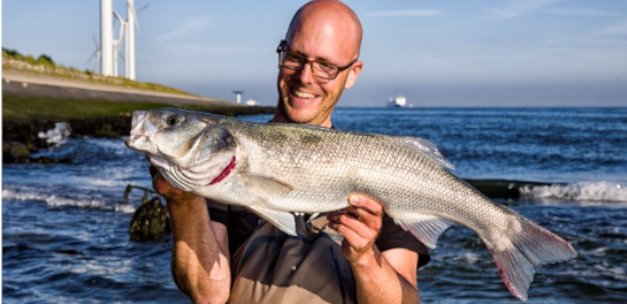 Zeebaars: meer ruimte voor de sportvisserij